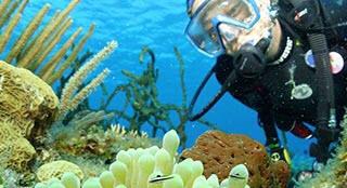 Underwater Ecologist